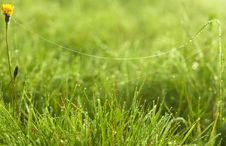 Free Spider Web On Fresh Green Grass Stock Photos - 16620053
