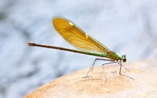 Free Dragonfly Stock Photography - 16623182