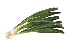 Free Spring Onions, Isolated Stock Photos - 16623293