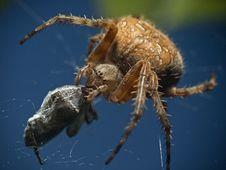 Free Spider Stock Photo - 16623630