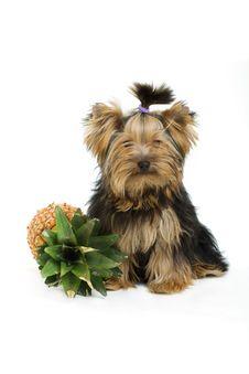 Free Dog Stock Images - 16624334