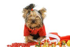 Free Dog Stock Image - 16624361