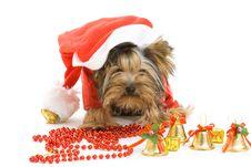 Free Dog Stock Photography - 16624362