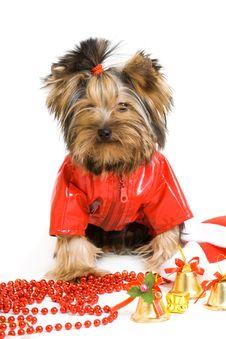 Free Dog Stock Photos - 16624363