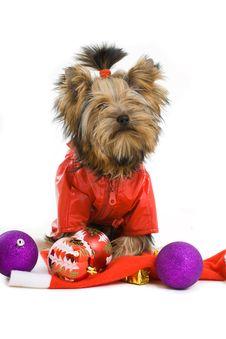 Free Dog Royalty Free Stock Photo - 16624365