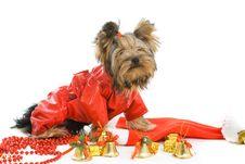 Free Dog Royalty Free Stock Image - 16624366