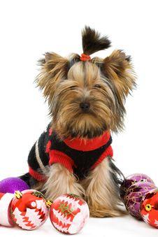 Free Dog Royalty Free Stock Images - 16624369