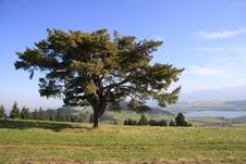 Free ...alone Tree... Royalty Free Stock Images - 16624519