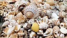 Free Seashell Stock Photography - 16625272