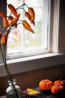 Free Window With Mini Pumpkin And Orange Peppers Royalty Free Stock Images - 16625299