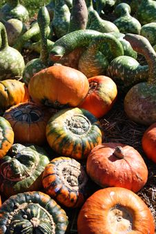 Free Fresh Pumpkins Royalty Free Stock Image - 16625486