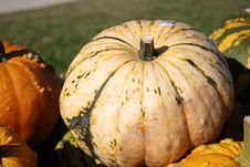 Free Fresh Pumpkins Stock Photos - 16625513