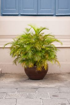 Free Potted Shrubs. Royalty Free Stock Image - 16626216