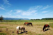Free Horse Royalty Free Stock Image - 16626366