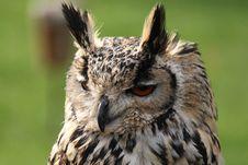 Free Boring Owl Royalty Free Stock Photo - 16626625