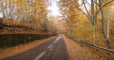 Free Autumn Road Forest Royalty Free Stock Photos - 16627198