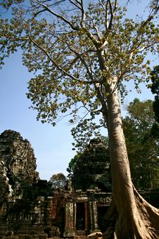 Free Ta Prohm Temple,Angkor Stock Photo - 16628610