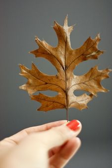 Free A Hand Holding A Leaf Royalty Free Stock Image - 16629206
