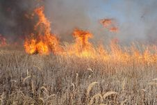Free Grass Fire Royalty Free Stock Photo - 16629435