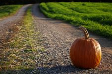 Free Pumpkin On The Road Stock Photo - 16629470