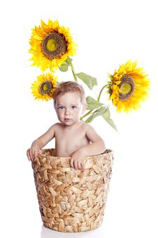 Free Baby Boy With Flowers On White Stock Photos - 16629523