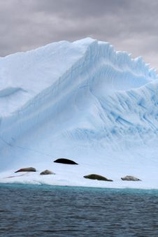 Antarctica Glacier Royalty Free Stock Images