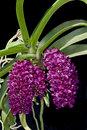 Free Wild Orchid Stock Images - 16630284