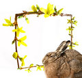 Free Hare And Spring Frame - Easter Card Royalty Free Stock Photo - 16631415
