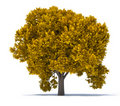 Free Tree Leaf Rust Royalty Free Stock Photos - 16632118
