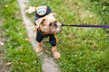Free Griffon Bruxellois Is Walking In Park Stock Photos - 16632463