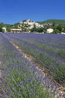 Free Lavender Village Royalty Free Stock Photo - 16630985
