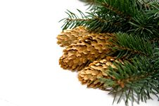 Free Christmas Tree Stock Photography - 16631212