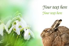 Free Spring Card With Little Hare Royalty Free Stock Photography - 16631437