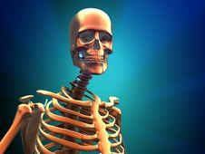 Free Human Skeleton Royalty Free Stock Images - 16632219