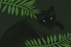 Eerie Cat Eyes Stock Photography