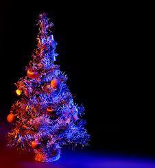 Free Christmas Fir Stock Image - 16633961