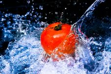 Free Tomato Stock Photography - 16634072