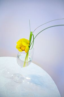 Free Flower In Vase Royalty Free Stock Photo - 16634315