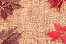 Free Linen Background With Leaves Stock Image - 16634481