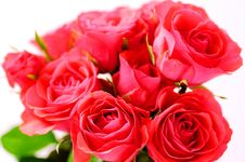 Free Rose Stock Image - 16634631