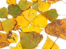 Free Yellow Leaves Stock Photography - 16634852