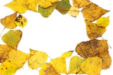 Free Yellow Leaves Royalty Free Stock Image - 16634896