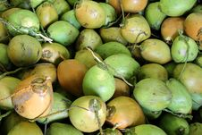 Free Fresh Green Coconuts Stock Photo - 16635610