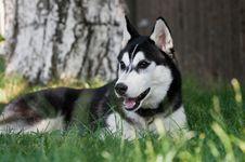 Free Dog Stock Photography - 16636352