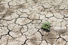 Free Barren Land At Summer Stock Photo - 16637600