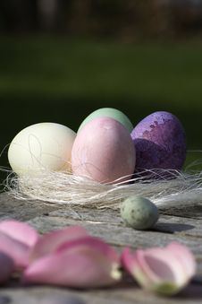 Free Easter Eggs Royalty Free Stock Photo - 16637985