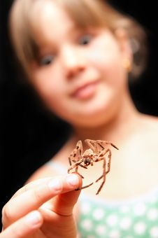 Free Girl Holding Brown Spider By One Leg And Looking S Stock Photo - 16638300