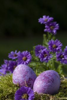 Free Two Purple Easter Eggs Royalty Free Stock Photography - 16638317