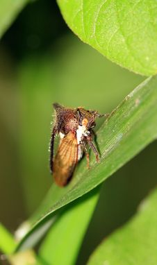 Tree Hopper Royalty Free Stock Images