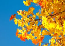 Free Autumn Foliage Stock Photography - 16638822